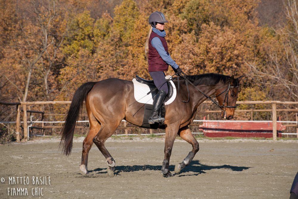 Il Cavallino d'Oro: un nuovo e bellissimo inizio