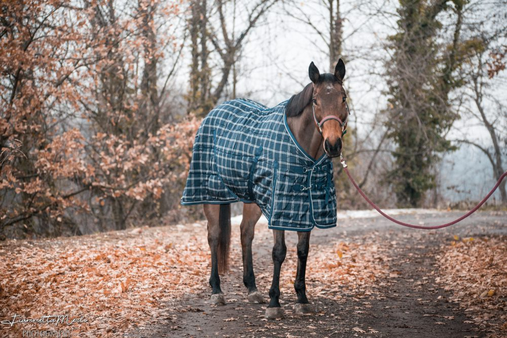 A cavallo amore e rispetto pagano sempre